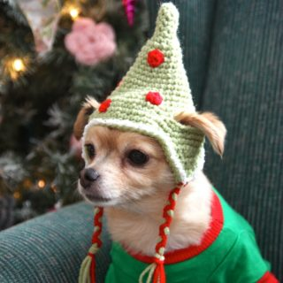 These Free Crochet Patterns Will Give You the Best Dressed Dog in Town