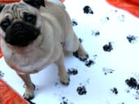 Four Legged Love: 10 DIY Ideas That Honor the Special Paws in Your Life